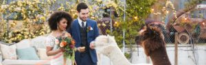 Sustainable Green Wedding at the Doyle in Las Vegas.